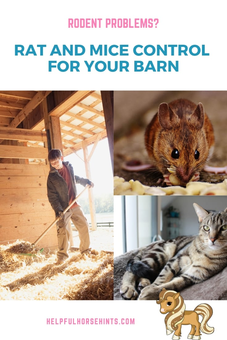 Pinterest pin - Controlling Rodents: Rat and Mice Control for Your Barn