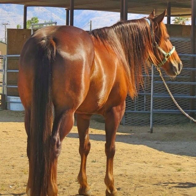 pretty red mare