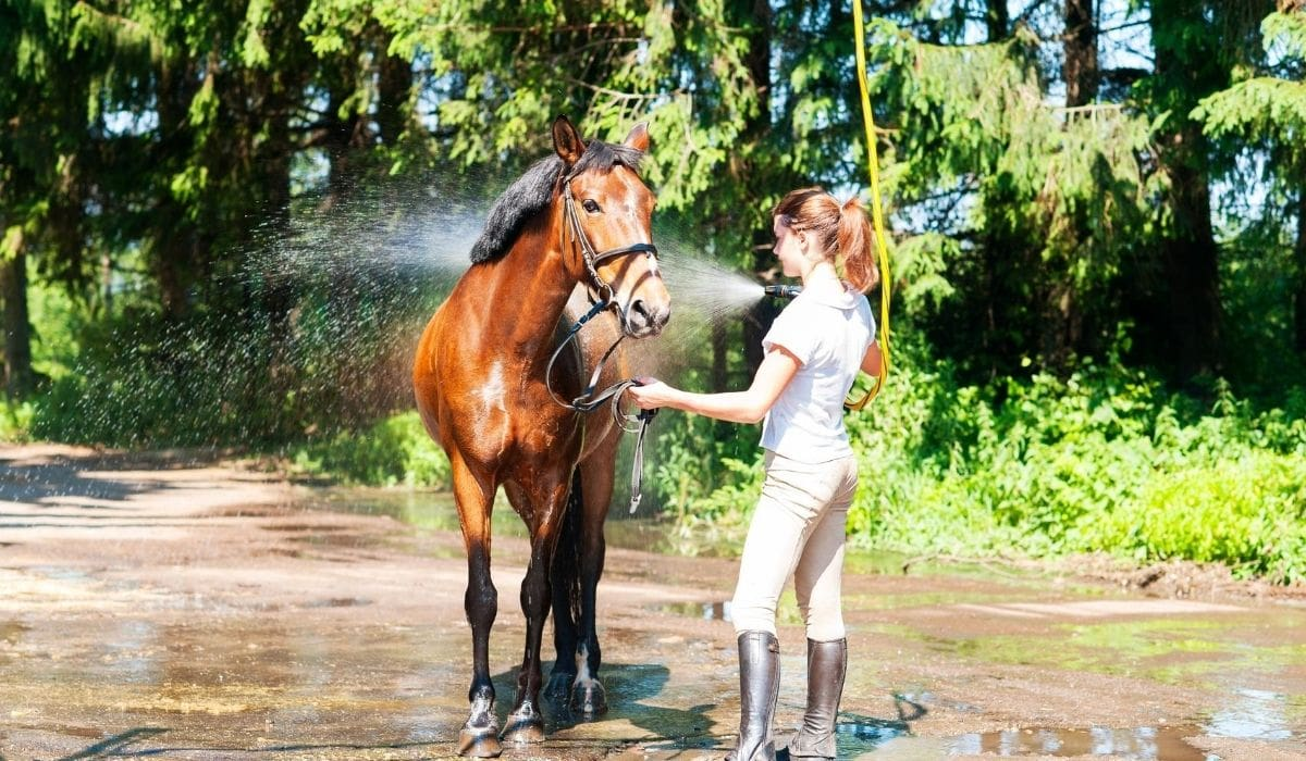 Showering the Horse