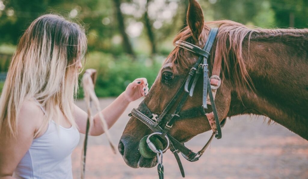 Smart Horse and Woman