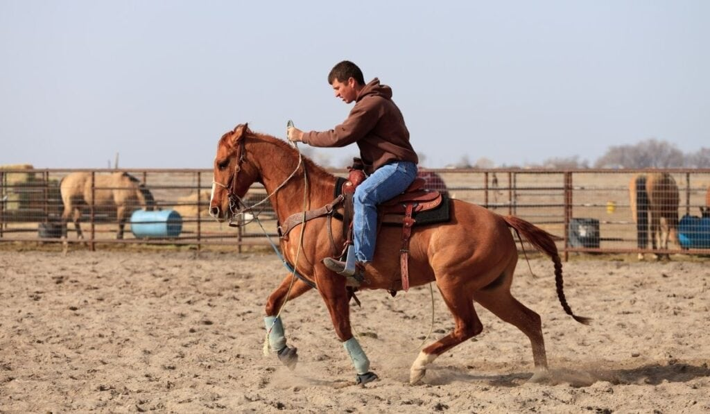 Teaching a Gaited Horse to Barrel Race