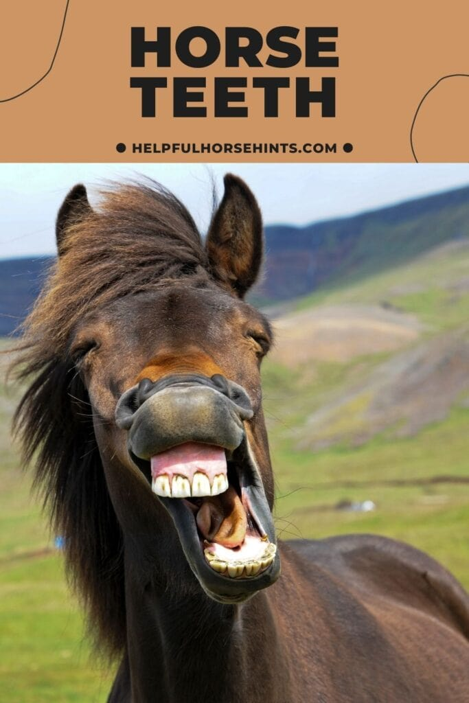 Pinterest pin - Horse Teeth