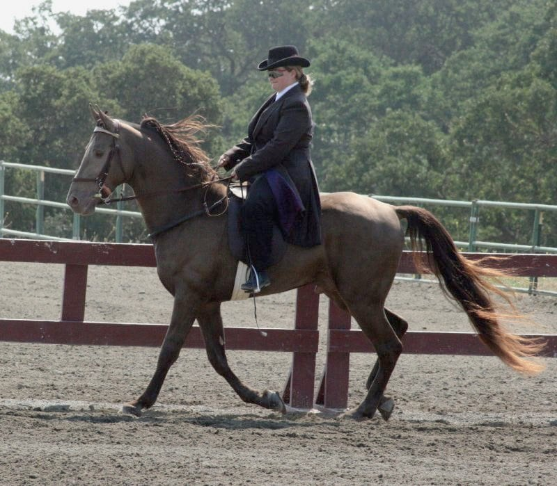 champagne colored tennessee walking horse