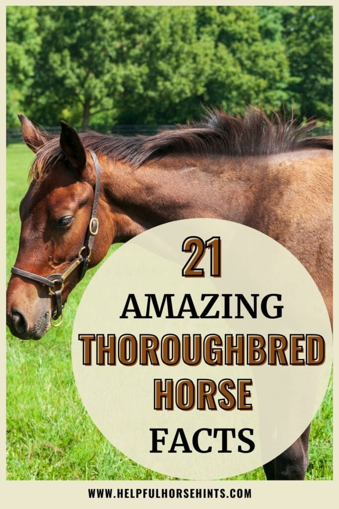 Pinterest pin - 21 Amazing Thoroughbred Horse Facts