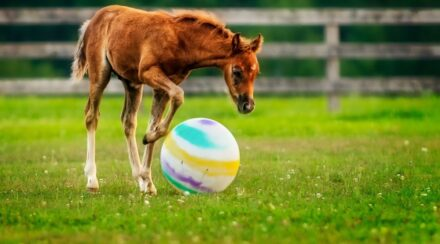 Toys For Horses To Play With