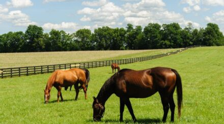13 Ways to Put Weight on a Thoroughbred
