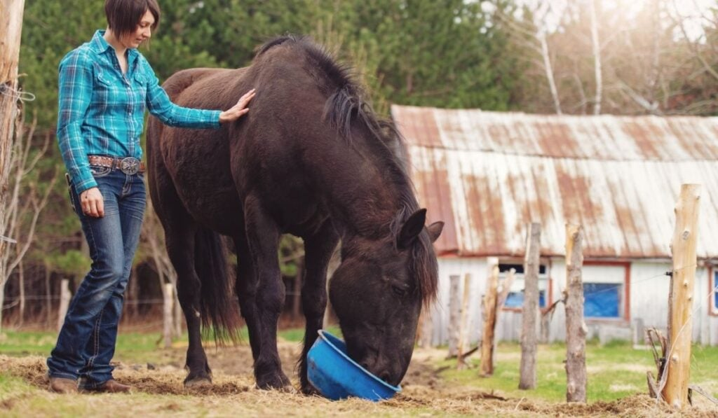 Vitamin Supplements For Horse
