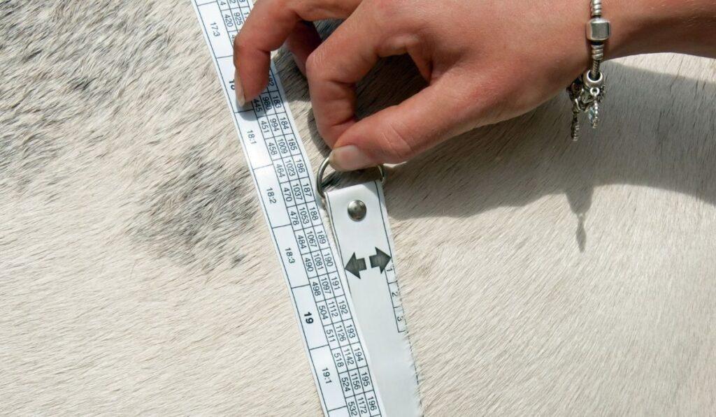 Weighting horse using Measuring Tape