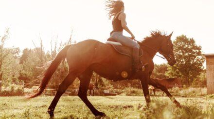 Is It Cruel to Ride Horses?
