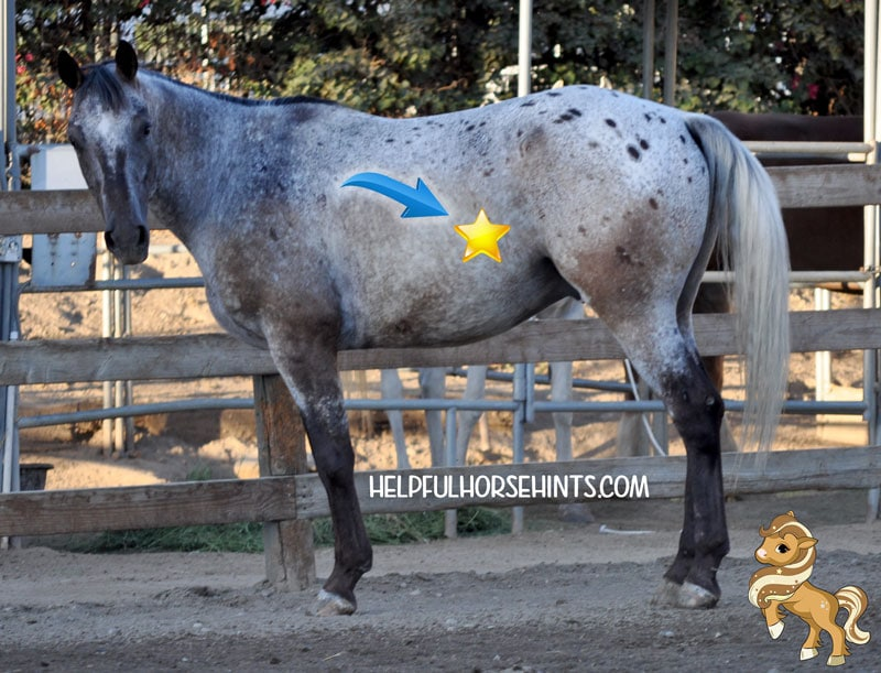 where to signal a horse for a hindquarter yield.