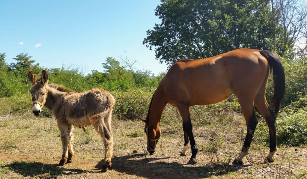 a donkey and a horse