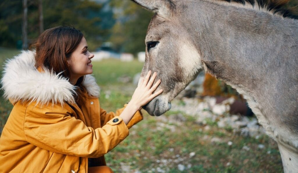 a lady caring for a donkey