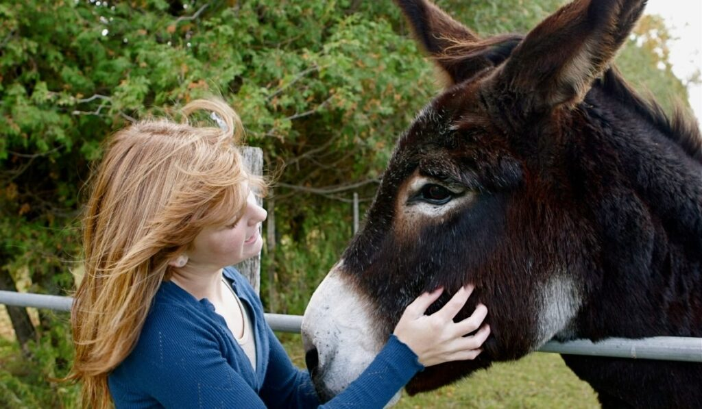 a lady pets a donkey in a farm