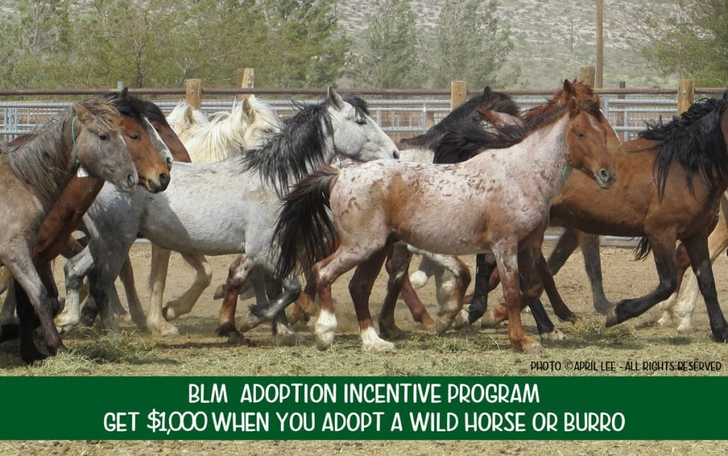 $1,000 Adoption Incentive offered by BLM