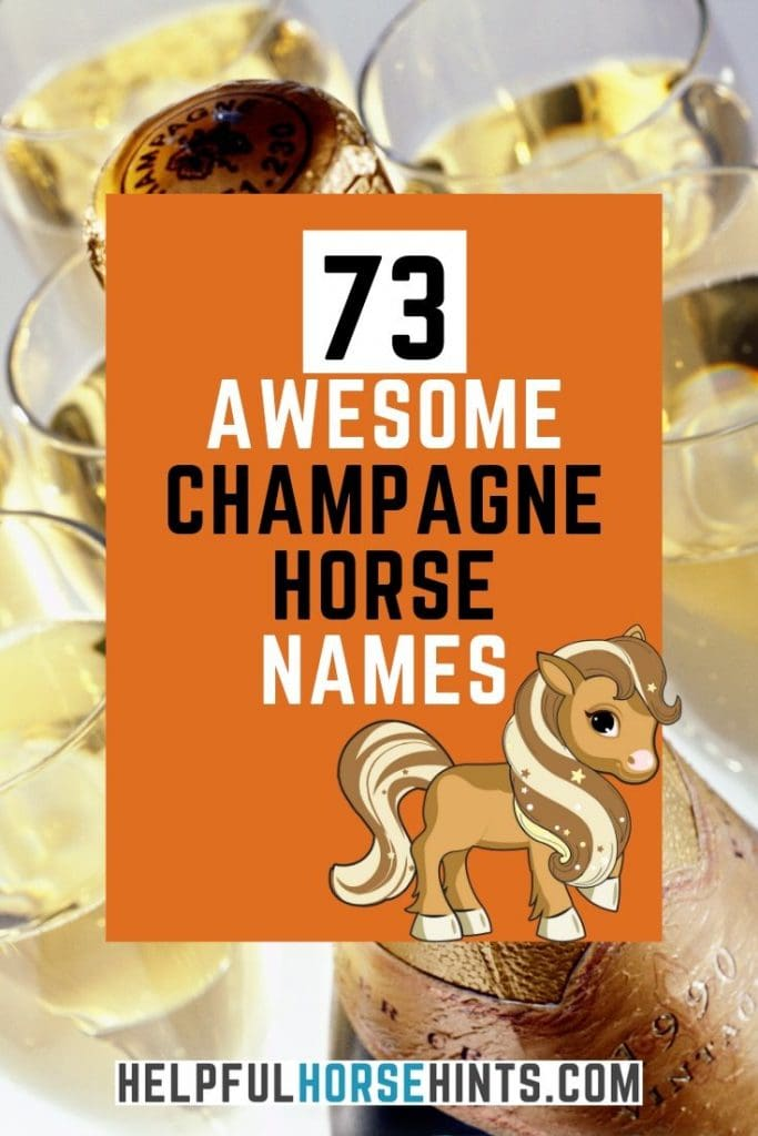 73 Awesome names for your champagne horse. Get some great ideas for naming your equine partner.
