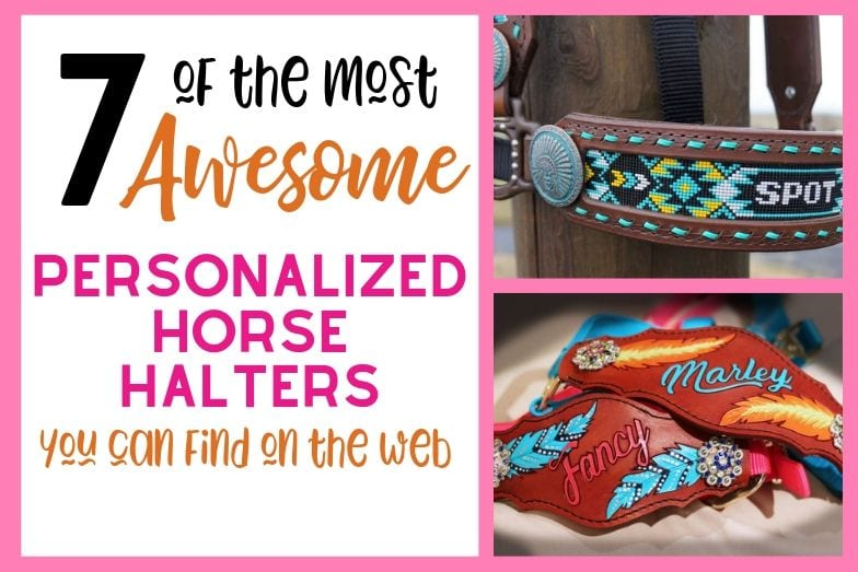 7 of the Most Awesome Personalized Horse Halters on the Web