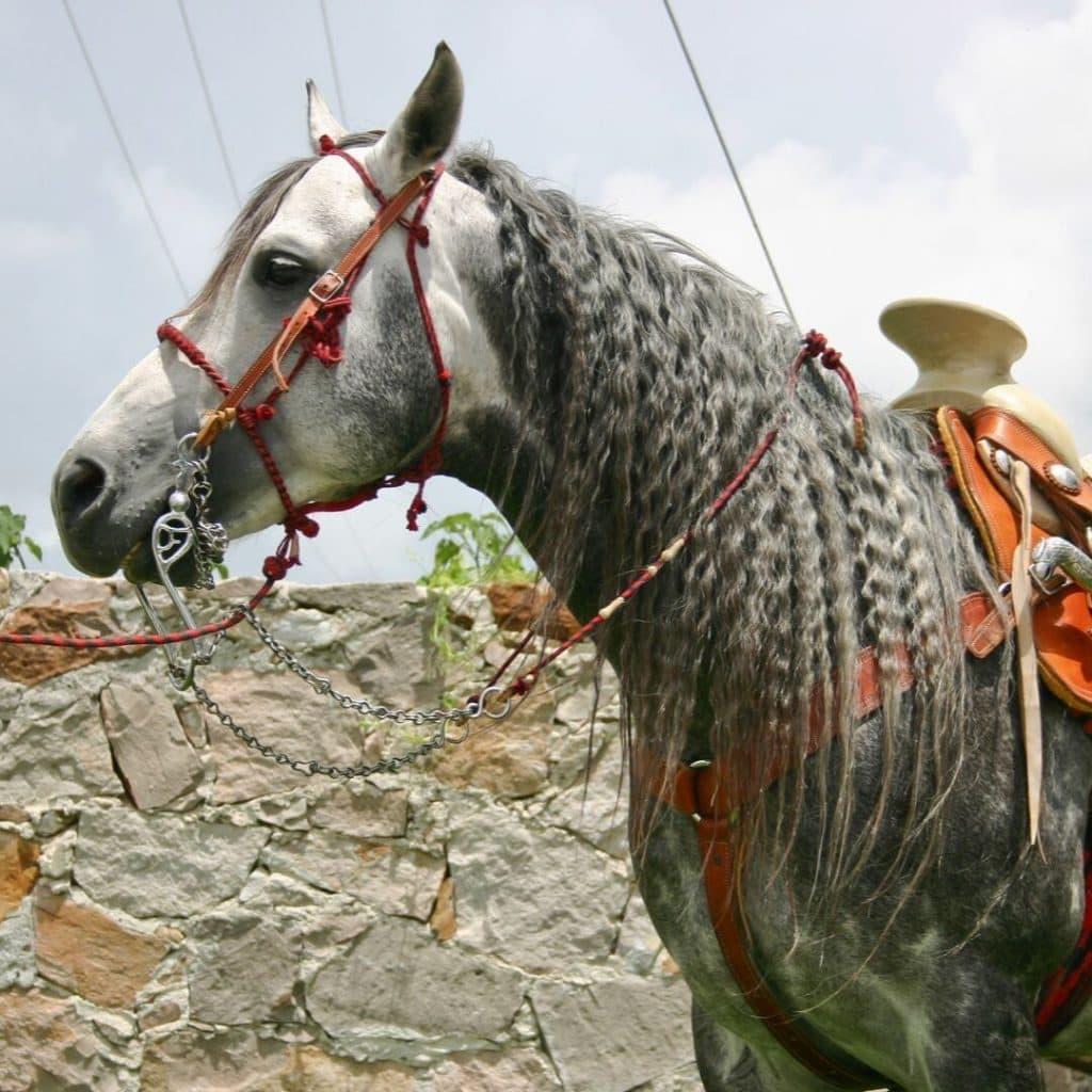 Azteca Horse