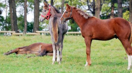 When Do Horses Stop Growing?
