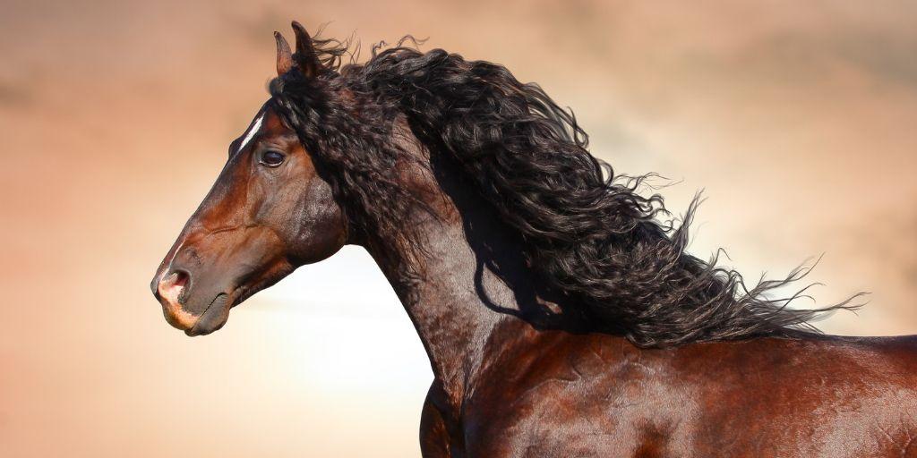 Bay Horse Color – Genetics, Shades, Breeds & Famous Bay Horses