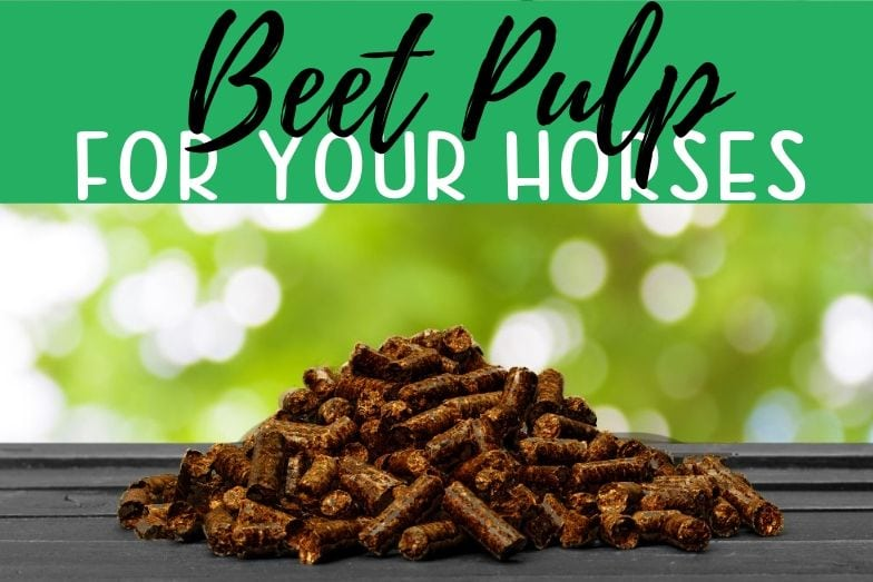 Beet Pulp For Your Horses: A Case for Wet and Dry