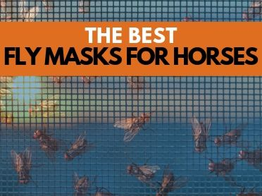 4 Best Fly Masks for Horses
