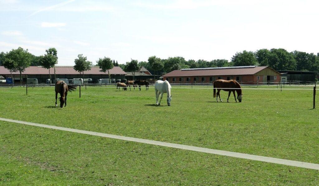 big horse farm