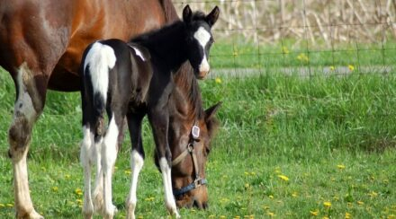 12 Fun Facts About Filly Horses