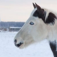 75 Excellent Names for Your Black & White Horse