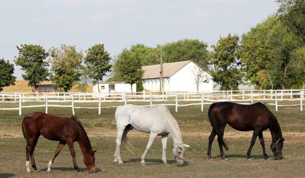 brown, white and black horses at the horse farm