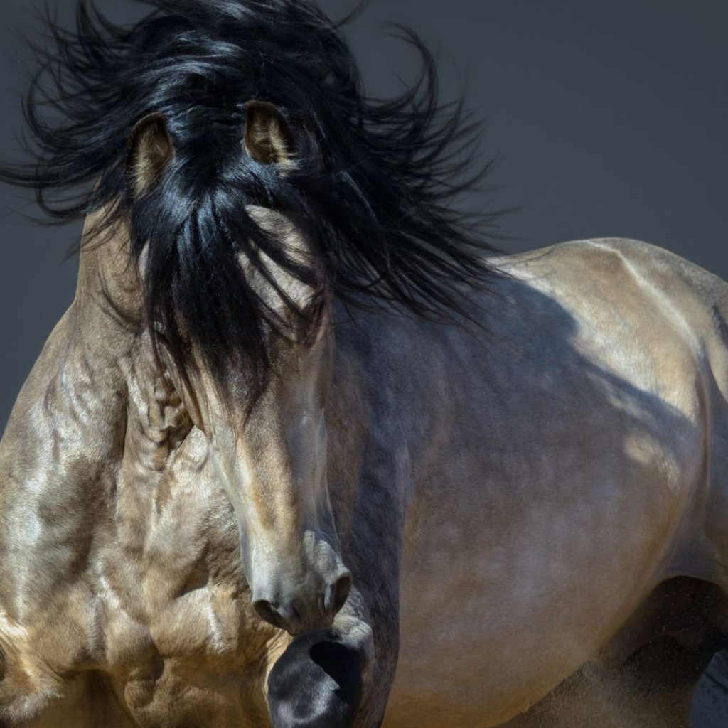 110 Names For Your Buckskin Horse Helpful Horse Hints