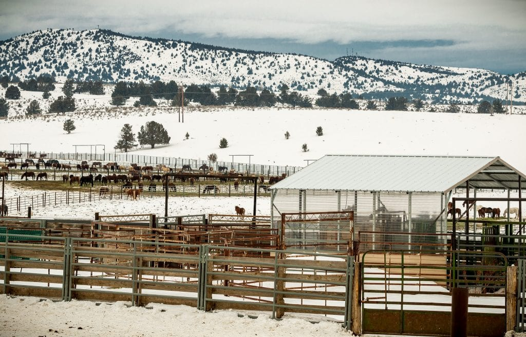 Photo of BLM Oregon Wild Horse Corrals by Greg Shine, BLM, January 31, 2017.