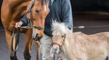 Can A Horse And Pony Mate? Yes, but should they?