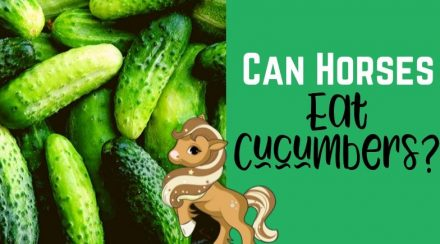 Can Horses Eat Cucumbers? Health Benefits & Precautions