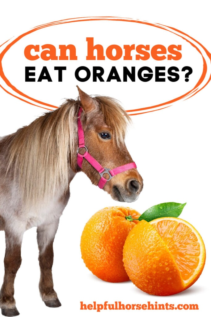 Can Horses Eat Oranges - Pinterest Pin
