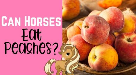 Letting A Horse Eat Peaches: Nutrition and Toxicity