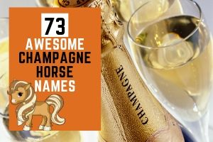 73 Awesome Champagne Horse Names