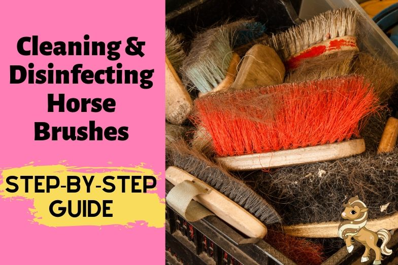 Step-by-Step Guide to Cleaning & Disinfecting Horse Brushes