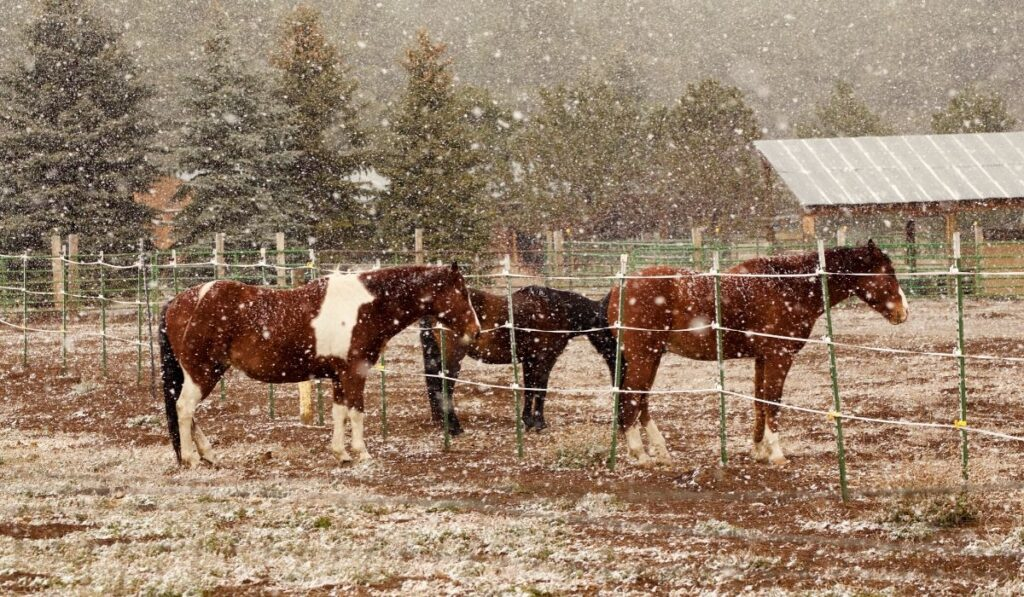cold horses in a snow storm