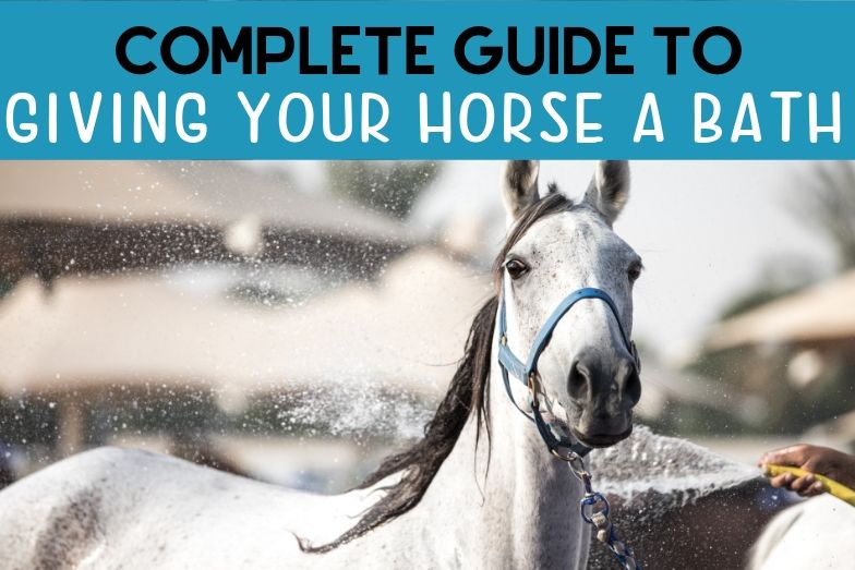 Complete Guide to Giving Your Horse A Bath