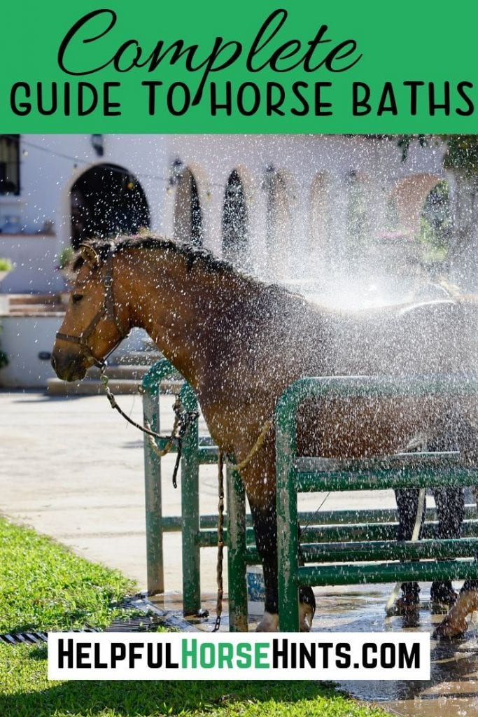 Pinterest pin - horse getting a bath