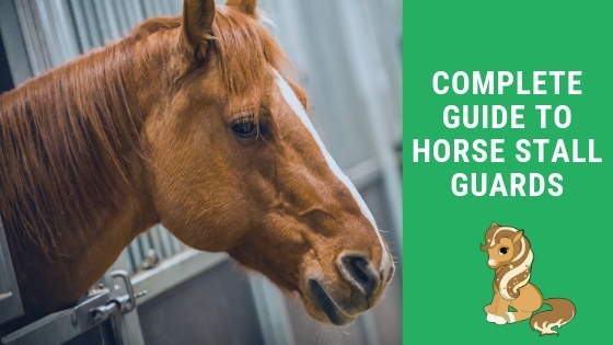 complete guide to horse stall guards