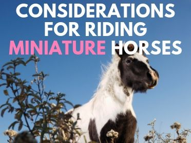 Considerations for Riding Miniature Horses