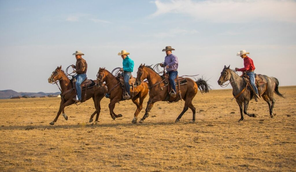 cowboys riding on the ranch