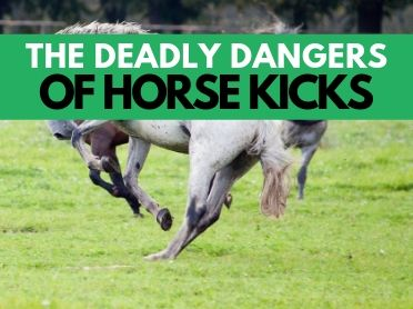 The Deadly Dangers of Horse Kicks
