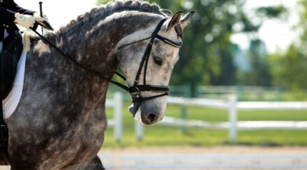 130+ Dapple Gray Horse Name Ideas for Males & Females