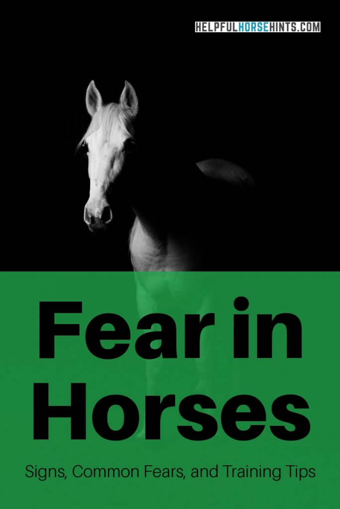 fear in horses training tips