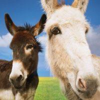 195+ Awesome Donkey & Burro Names