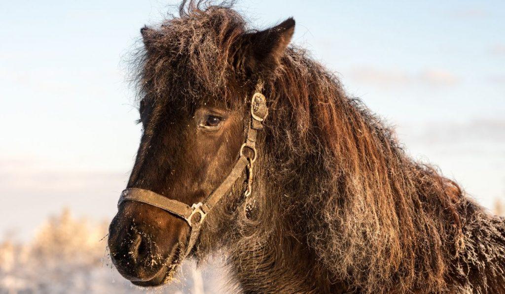 Dirty Pony