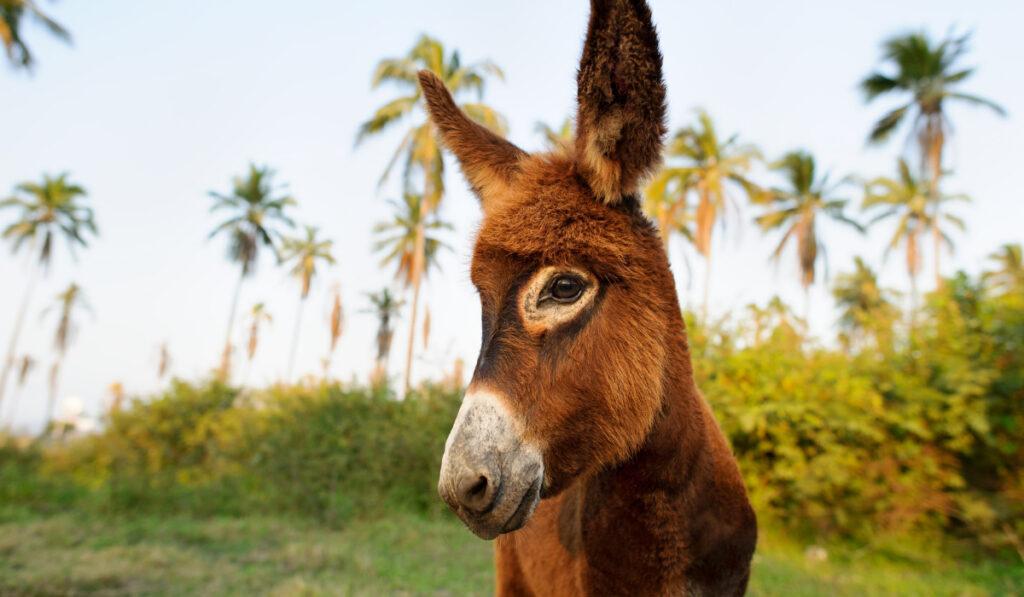 close up photo of a donkey