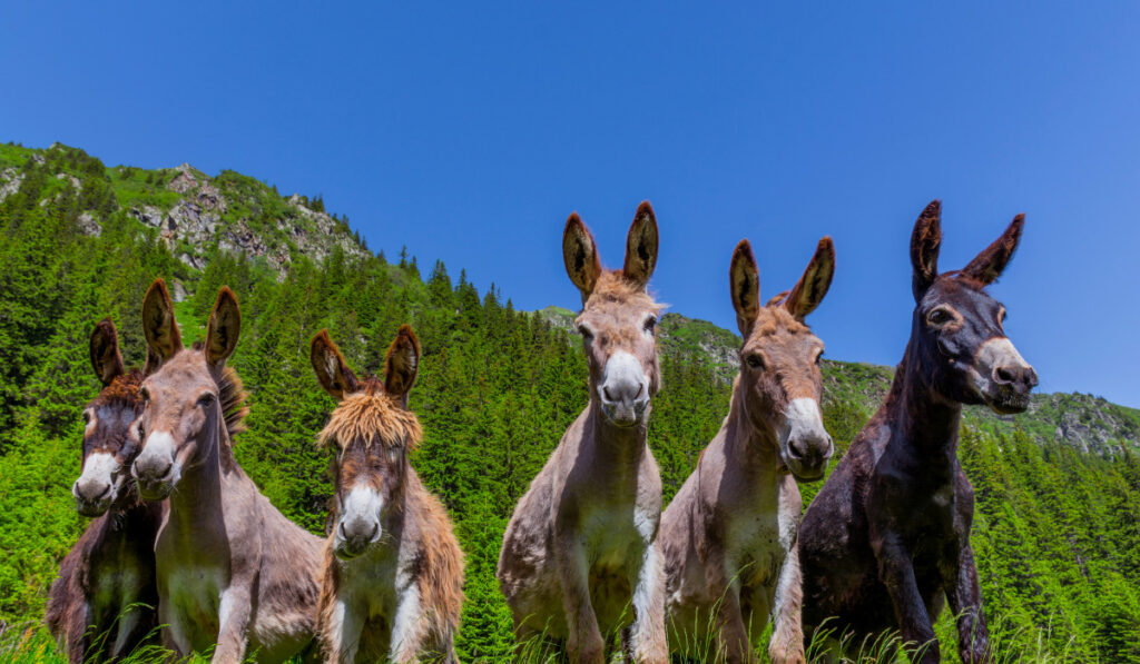 A worm view of six donkeys in the field